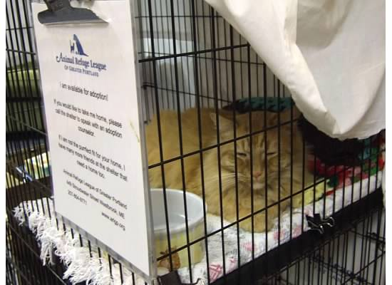 Longfellow Books adopt-a-cat Bob